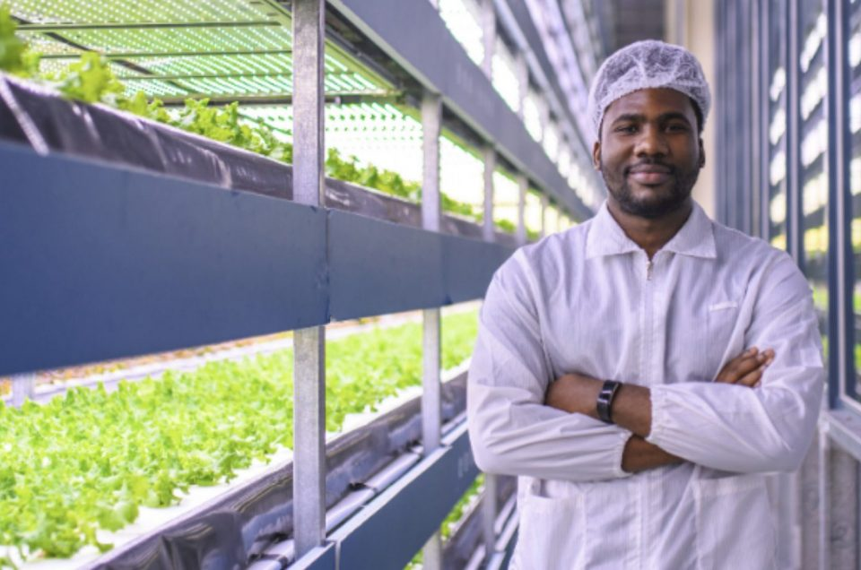 KTN is helping to transform food production and find new farming innovation pathways
